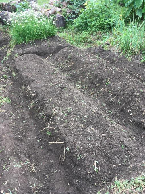 畑です。畝作りです。_f0182246_21193594.jpg
