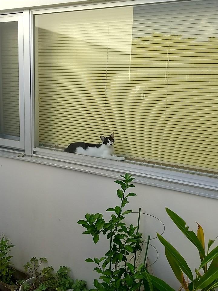 猫は窓際がお好き♡_e0251855_08411042.jpg