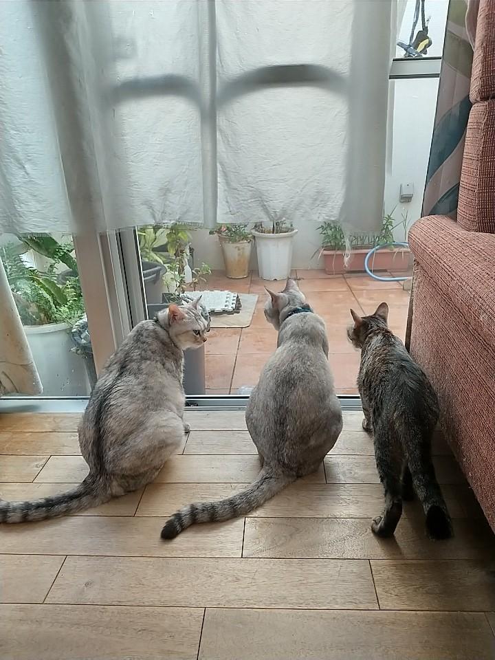 猫は窓際がお好き♡_e0251855_08411157.jpg