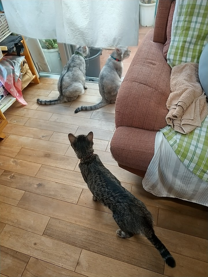 猫は窓際がお好き♡_e0251855_08411162.jpg