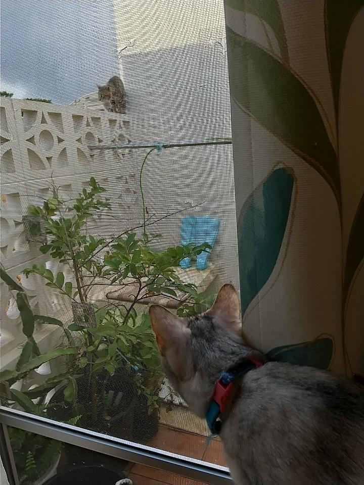 猫は窓際がお好き♡_e0251855_08422207.jpg