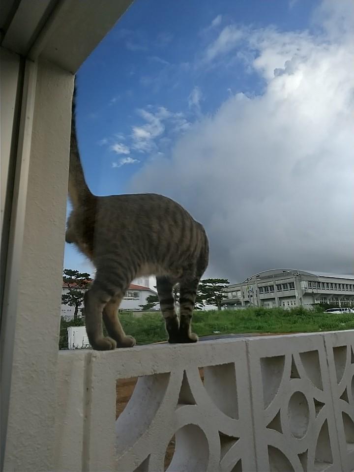 猫は窓際がお好き♡_e0251855_08422307.jpg