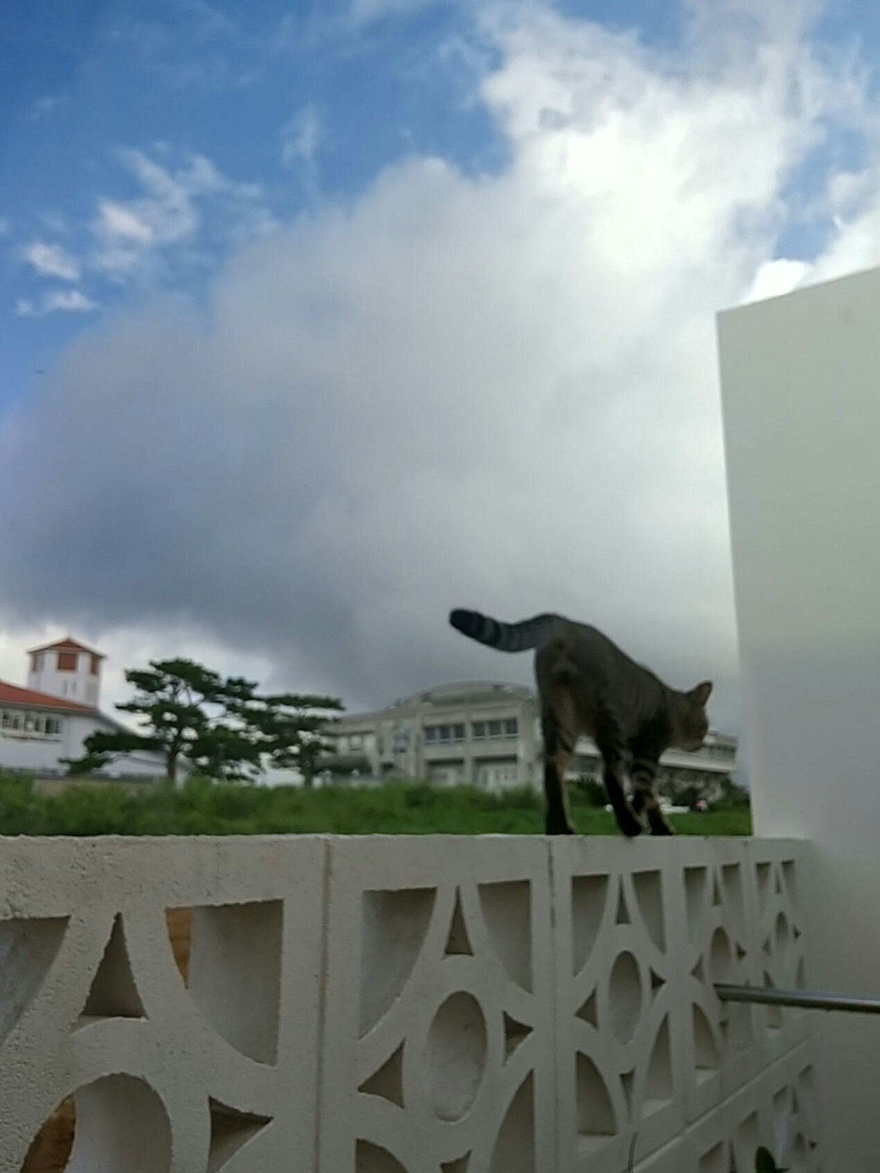 猫は窓際がお好き♡_e0251855_08422352.jpg