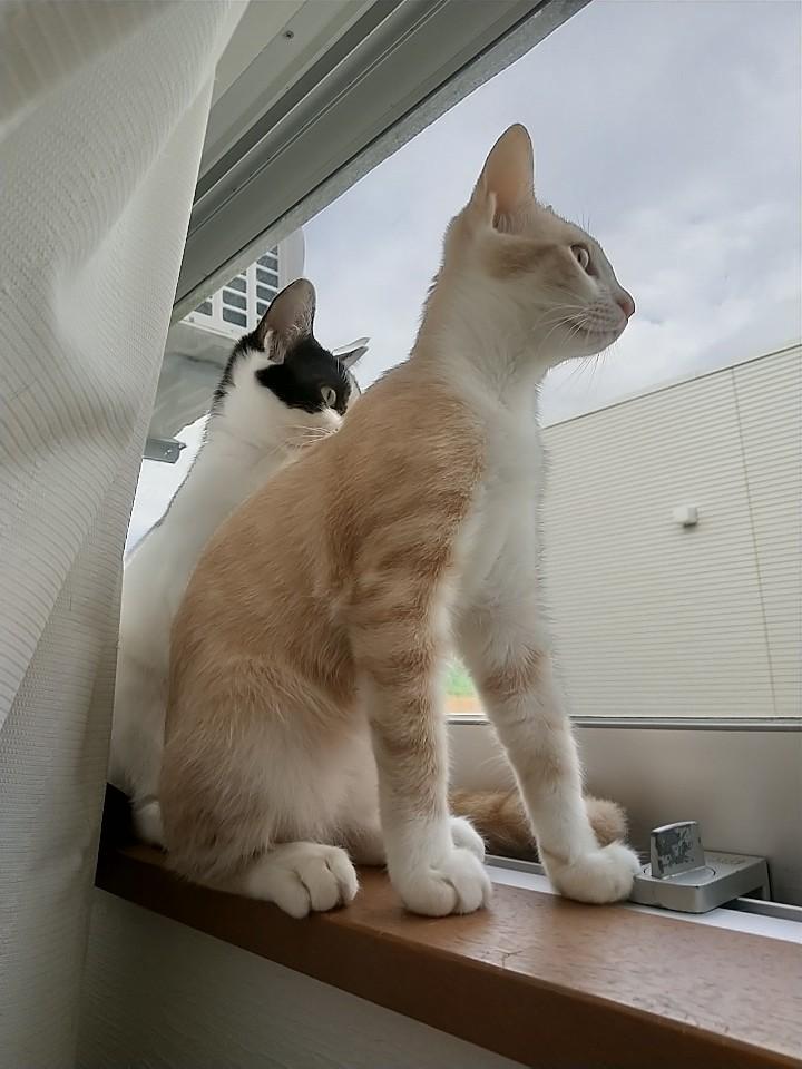 猫は窓際がお好き♡_e0251855_08444775.jpg