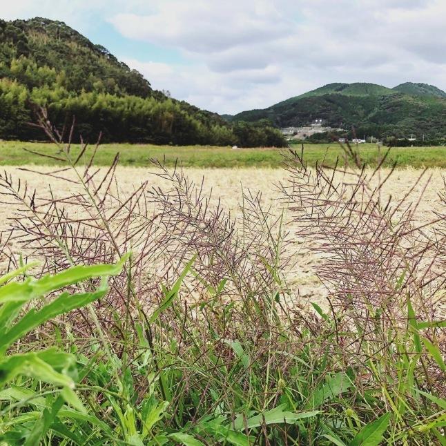 『自然の中をお散歩&フラワーレッスン』福岡_a0335560_11214870.jpeg
