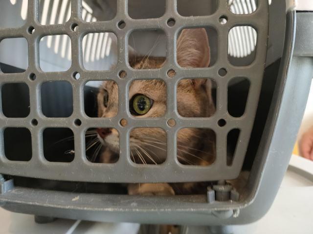 3猫ひとからげで、ワクチンぷっちゅんぬ。_b0051172_16185352.jpg