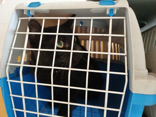 3猫ひとからげで、ワクチンぷっちゅんぬ。_b0051172_16193541.jpg