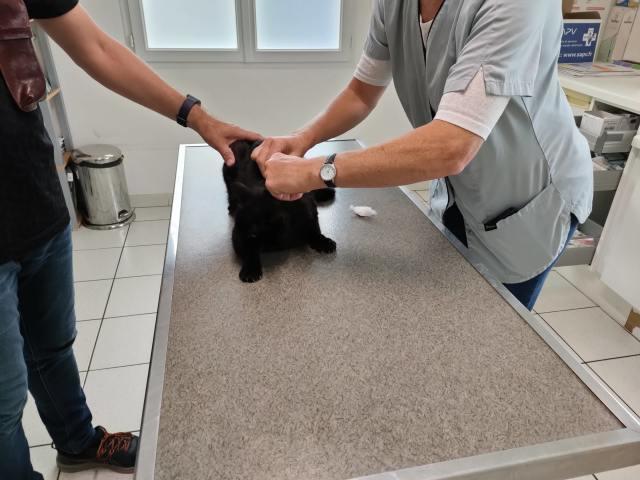 3猫ひとからげで、ワクチンぷっちゅんぬ。_b0051172_16240372.jpg