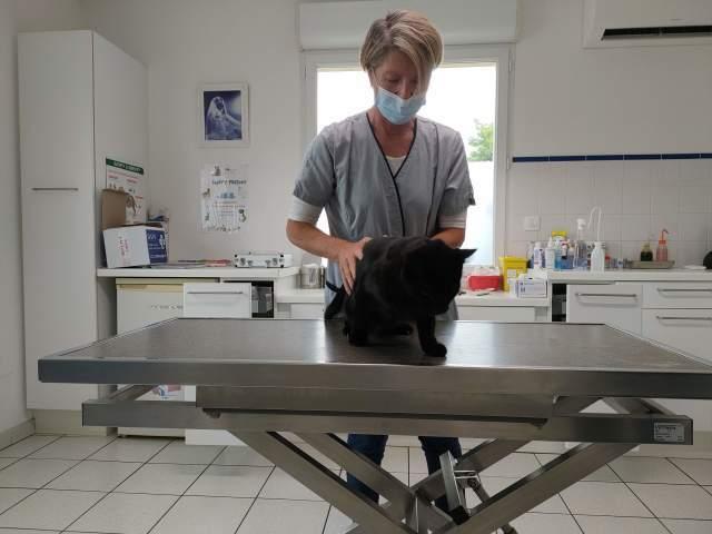 3猫ひとからげで、ワクチンぷっちゅんぬ。_b0051172_16311793.jpg