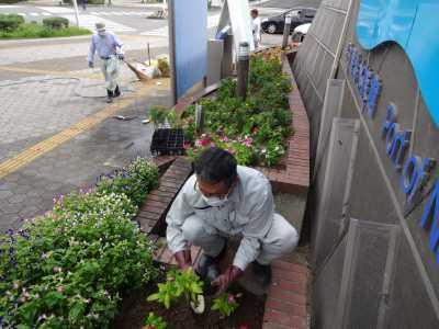 ガーデンふ頭総合案内所前花壇の植替えR3.9.13_d0338682_16173173.jpg