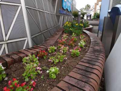 ガーデンふ頭総合案内所前花壇の植替えR3.9.13_d0338682_16174308.jpg