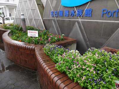 ガーデンふ頭総合案内所前花壇の植替えR3.9.13_d0338682_16175290.jpg