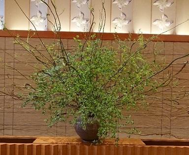虎ノ門 ホテルオークラ オーキッド_a0264383_20055679.jpg