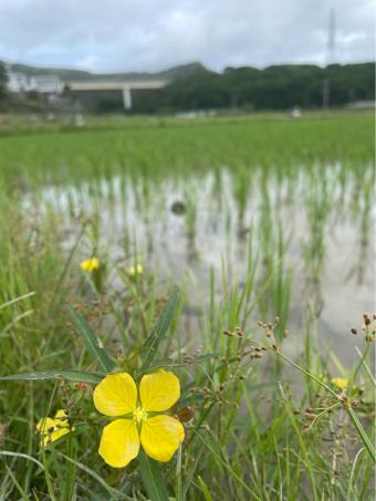 京都 個展のお知らせです!_c0176406_17471242.jpg