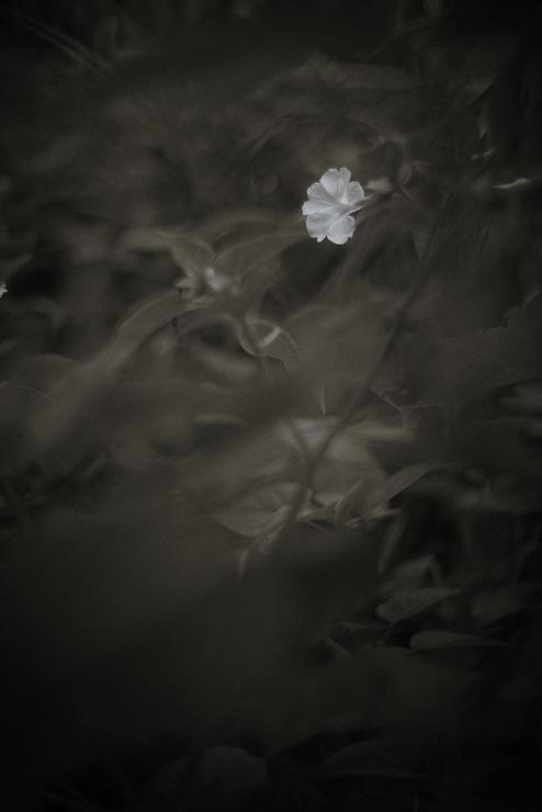 flower_e0342136_18560587.jpg