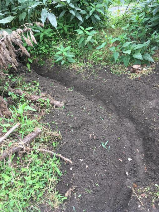 畑です。畝作りです。_f0182246_21052280.jpg