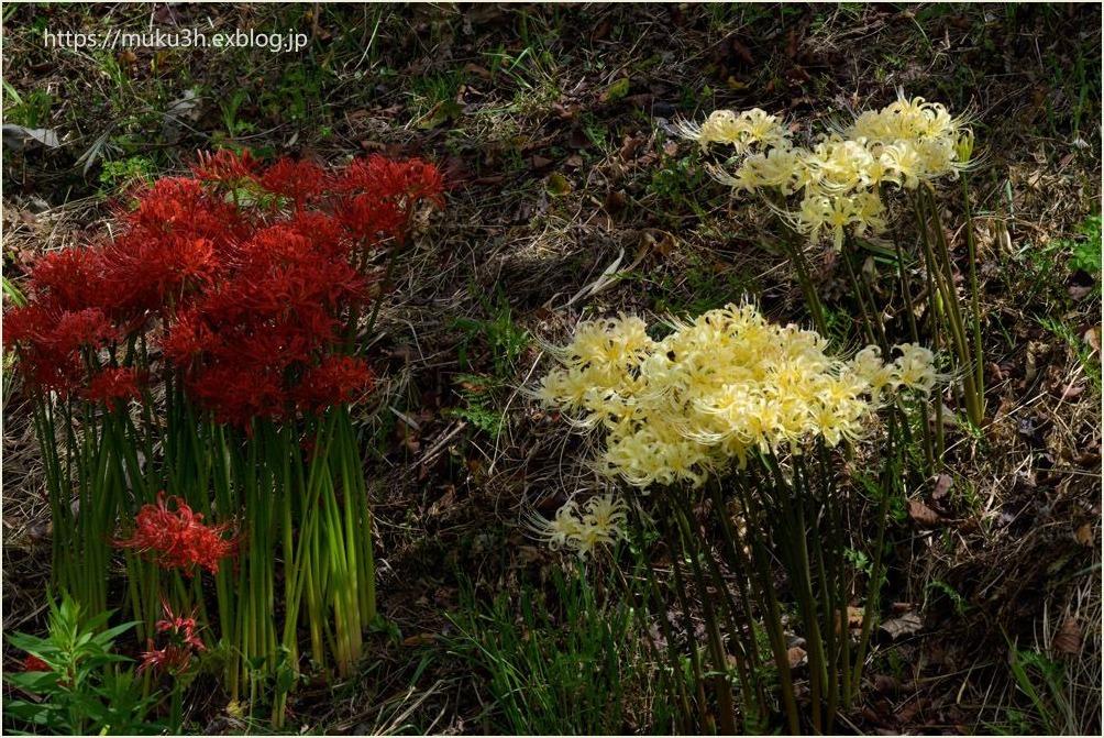 野に咲く赤と白_c0124256_11395041.jpg