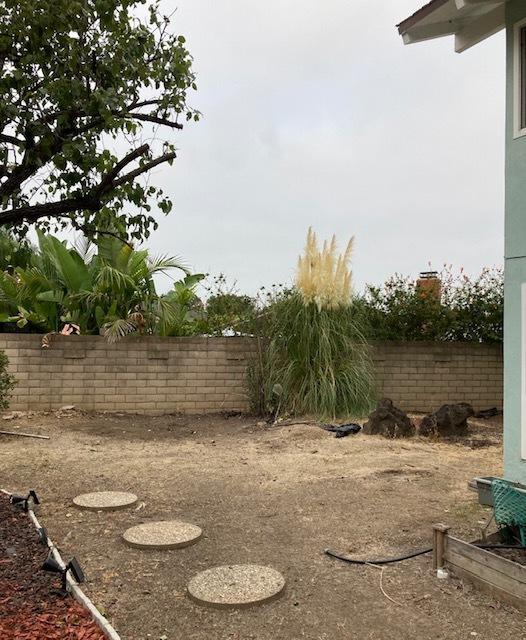 裏庭がすっきりしすぎた。。。_e0350971_12265416.jpg