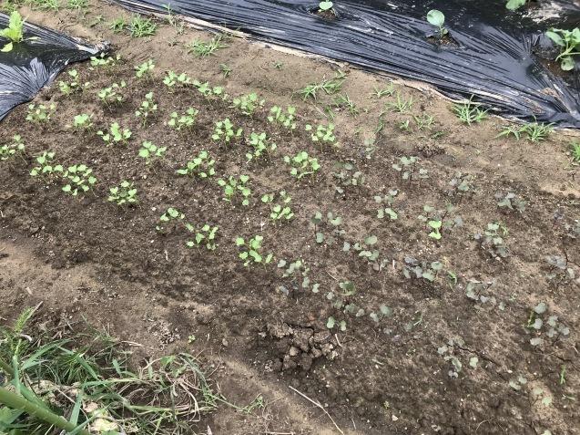 9月は畑仕事が忙しいですよね~_c0369304_08433556.jpg