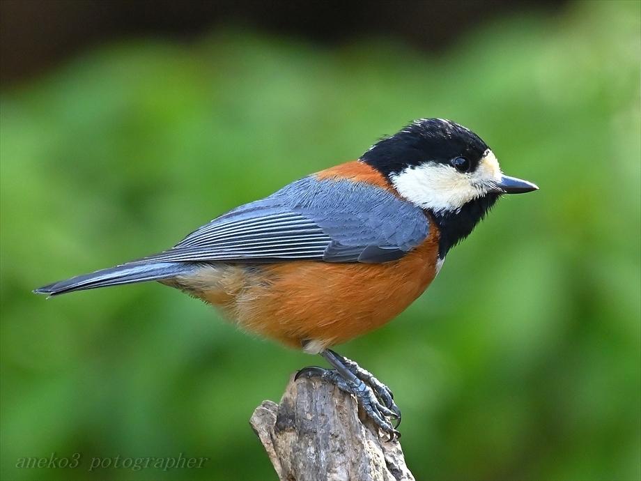 みちのく小鳥たち26_d0067934_21255157.jpg