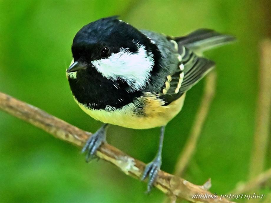 みちのく小鳥たち27_d0067934_13384742.jpg