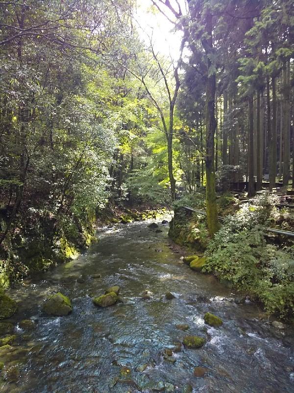 森林浴でリフレッシュする日_c0292342_22214972.jpg