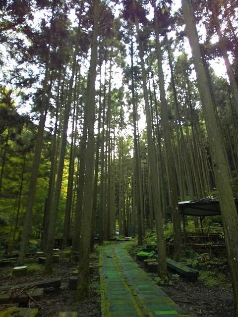 森林浴でリフレッシュする日_c0292342_22222347.jpg