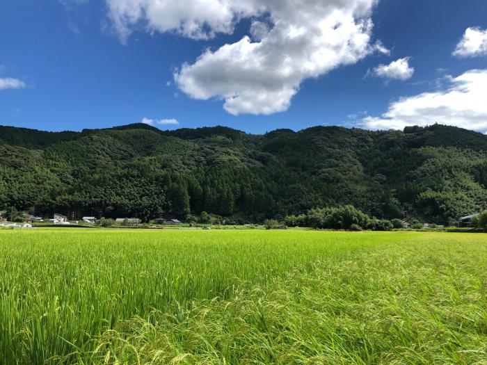 秋の風景 朝比奈 玉取 地区_d0099845_15435373.jpg
