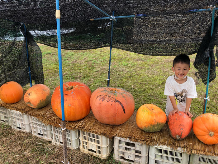 秋の風景 朝比奈 玉取 地区_d0099845_15530976.jpg
