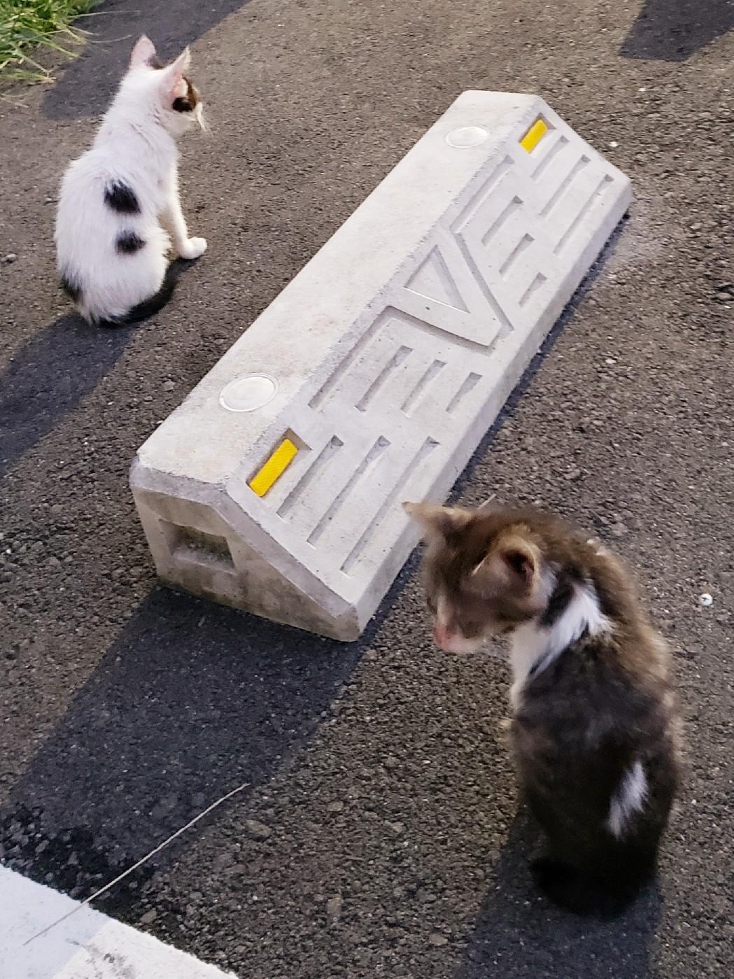 仔猫の行方_c0193077_15251164.jpg
