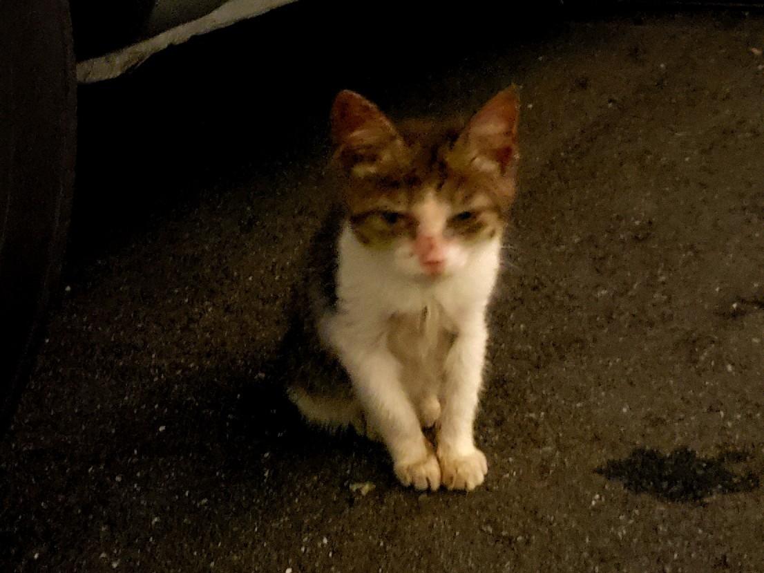 仔猫の行方_c0193077_15251187.jpg