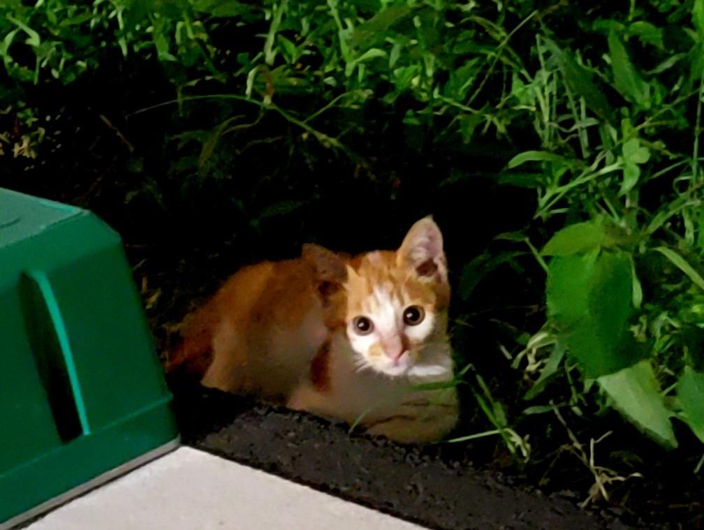 仔猫の行方_c0193077_15253776.jpg