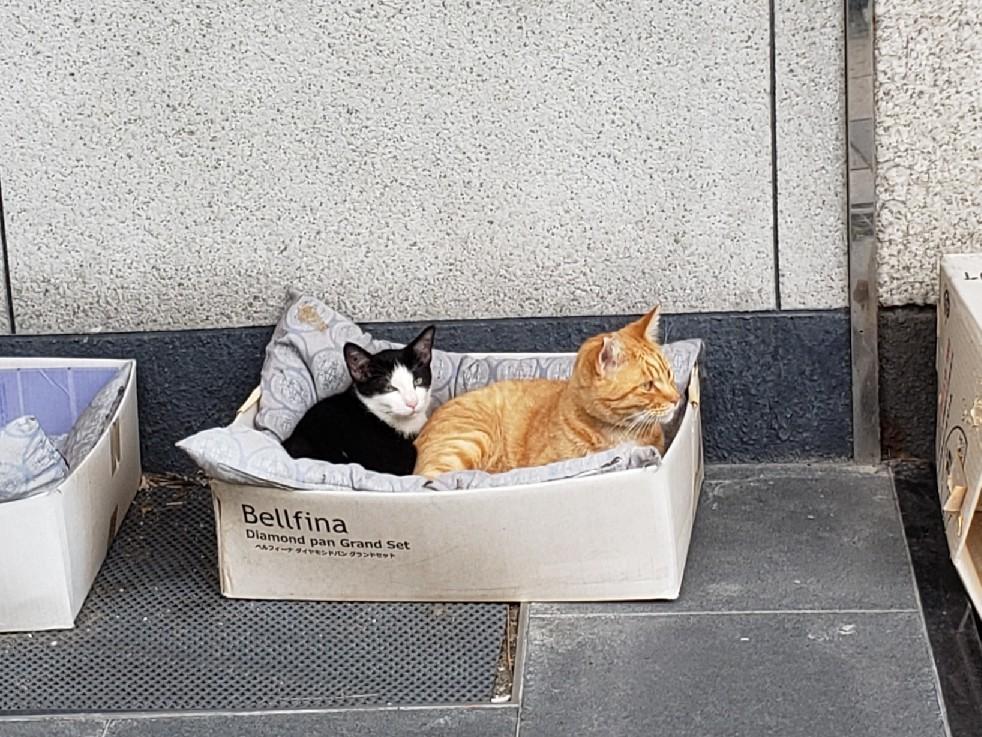 仔猫の行方_c0193077_15253817.jpg