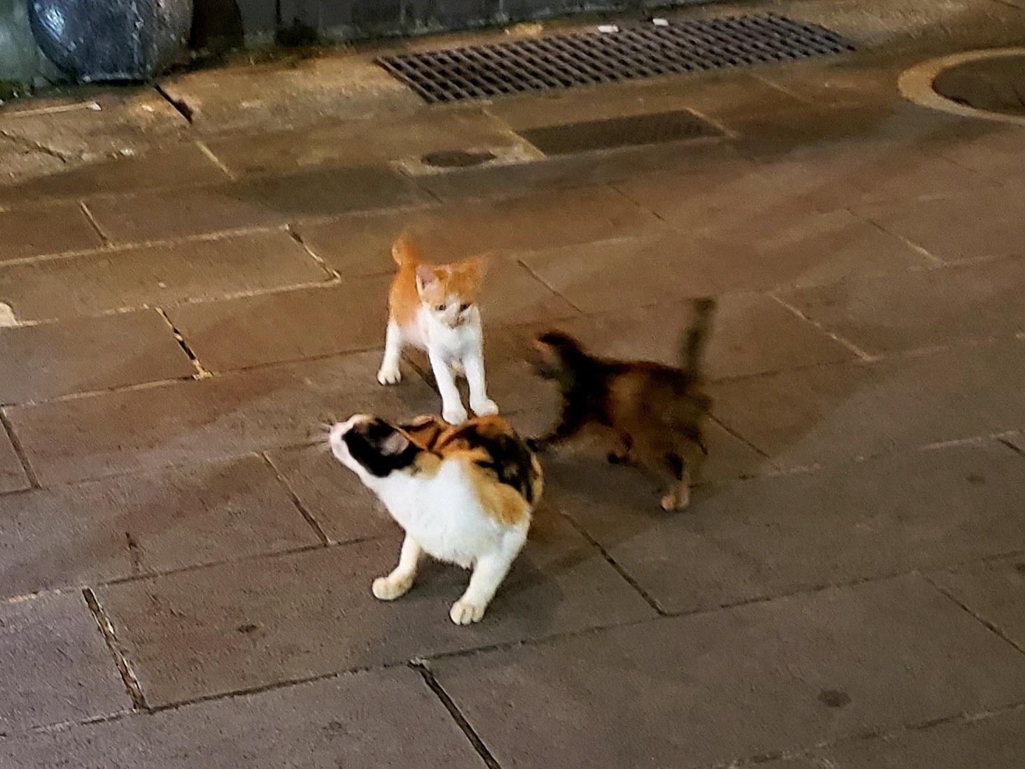 仔猫の行方_c0193077_15253898.jpg