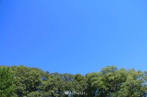 台風一過の日曜日(^^)/_c0140599_12493268.jpg