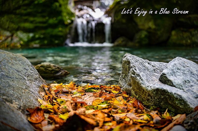 秋艶を捜しに_c0339900_16065419.jpg