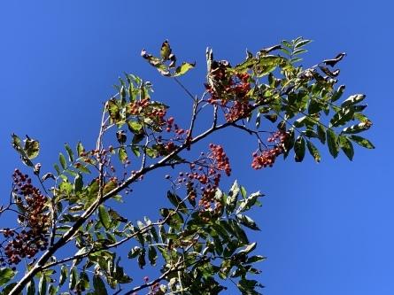 秋を感じる季節になりましたね!_f0101226_11514217.jpeg