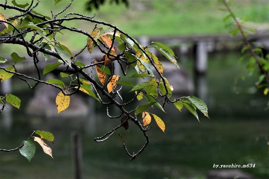 秋の・・・_b0343543_20193389.jpg