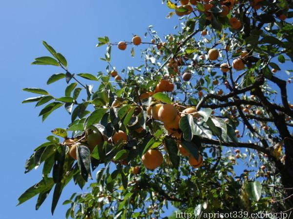 秋の植えつけに向けて 植栽スペースの開墾作業2 - シンプルで心地いい暮らし