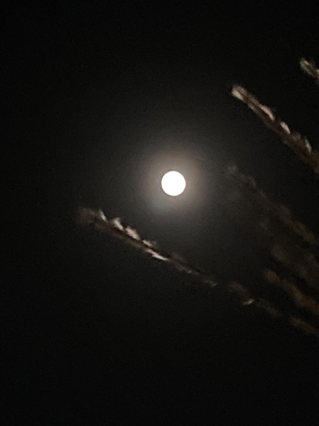 中秋の名月_e0138812_09570399.jpg