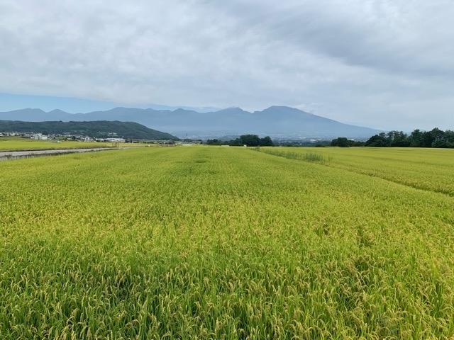 軽井沢から西へ。キッチンカーを求めて五郎兵衛新田へ。_d0035921_08472186.jpg