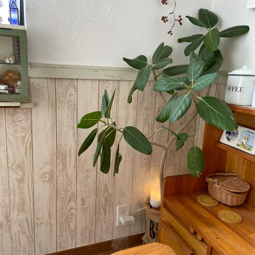 リビングにお勧めの観葉植物。ついでの大掃除と配置換えでリフレッシュ♪_f0023333_23233744.jpg