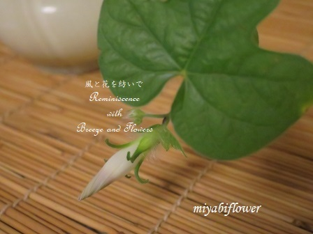 思いがけない花が咲いて・・・ - 風と花を紡いで