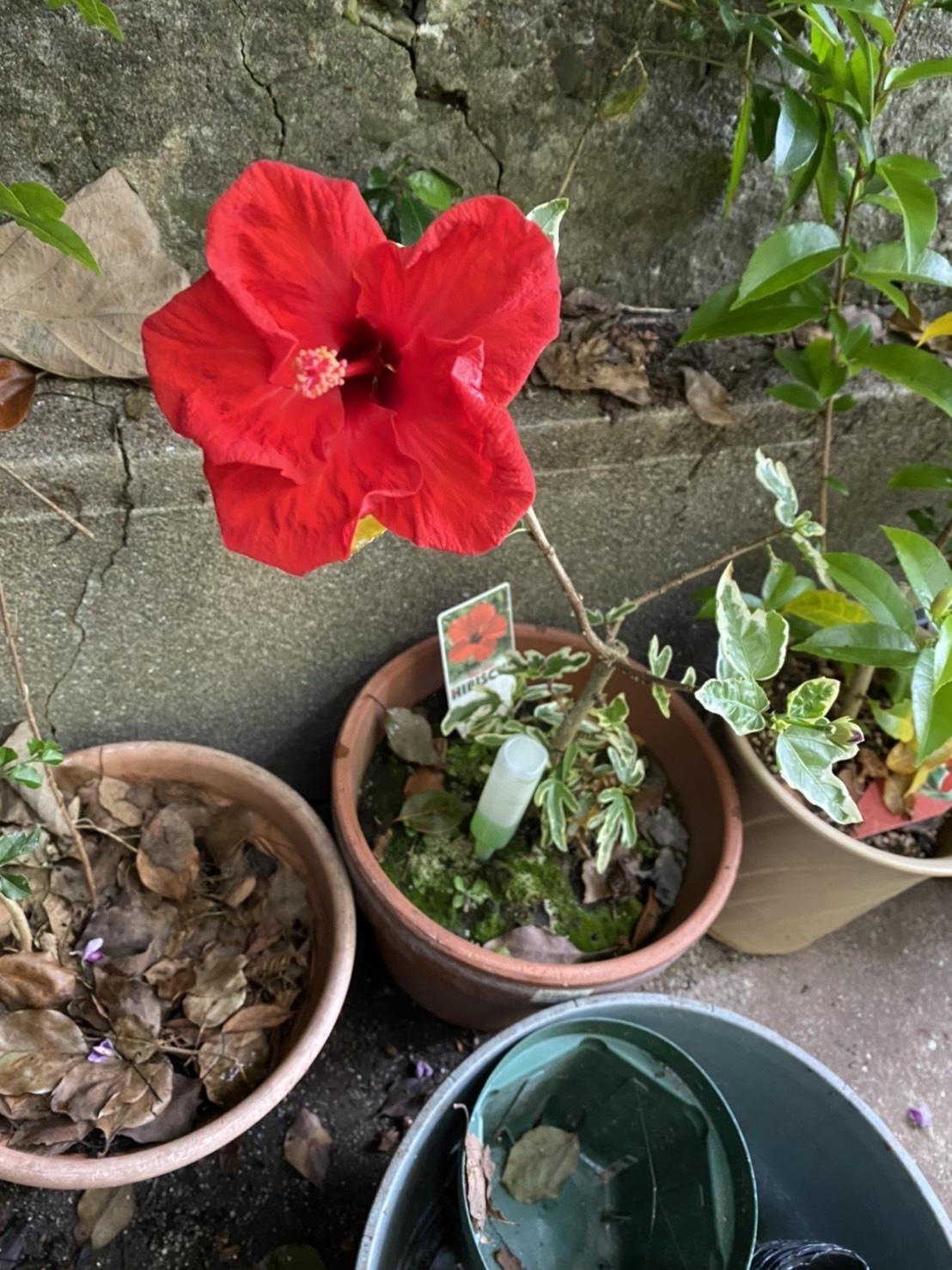花が咲きました!_c0290504_17343273.jpg
