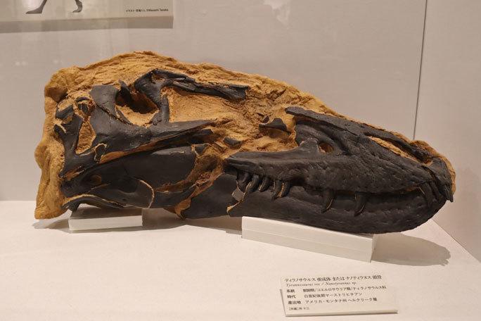 恐竜科学博~頂点捕食者ティラノサウルス_b0355317_11405114.jpg