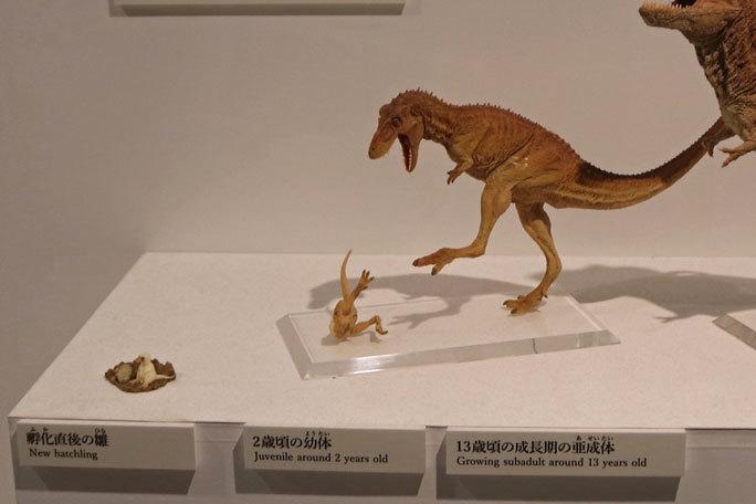 恐竜科学博~頂点捕食者ティラノサウルス_b0355317_11435711.jpg