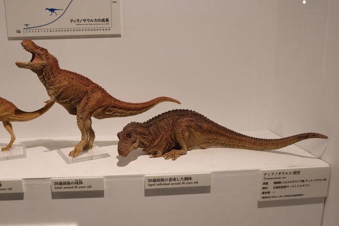 恐竜科学博~頂点捕食者ティラノサウルス_b0355317_11464156.jpg