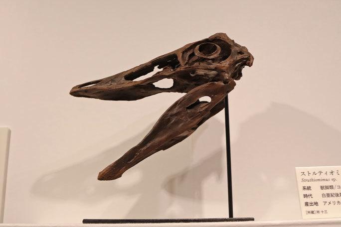 恐竜科学博:恐竜時代の最後を飾る恐竜たち~アンズ、モノニクス、アンキロサウルス等_b0355317_18185463.jpg