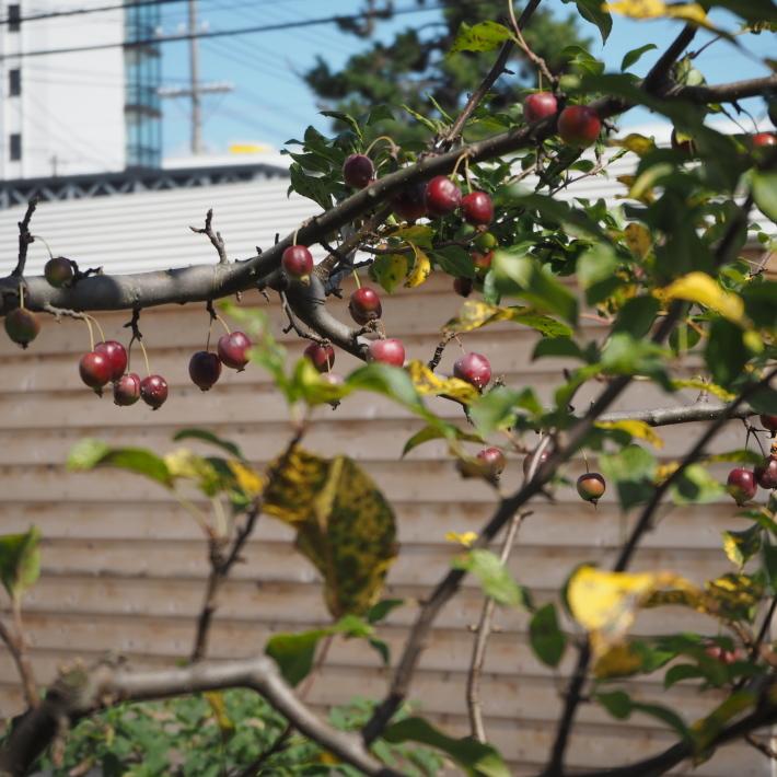 秋晴れとクラブアップル - sola og planta ハーブを育てながら