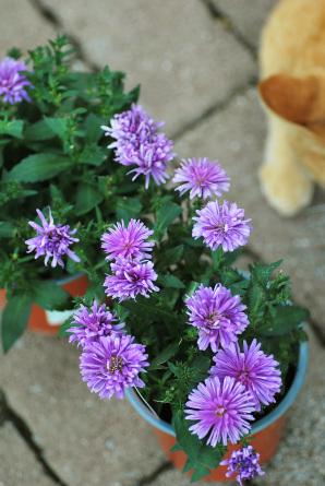 9/23 「あら可愛い」 - 「あなたに似た花。」